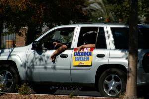 AFL-CIO Protestor Drive-By