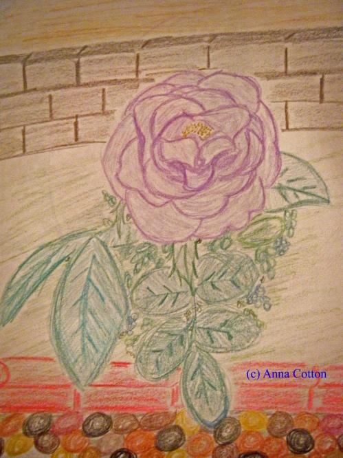 Love Potion Rose