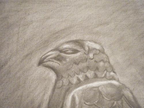 Falcon detail