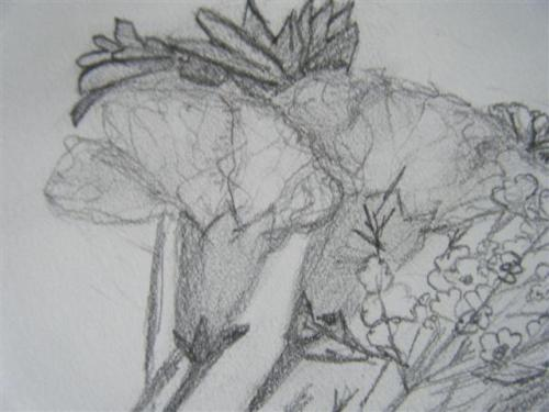 Carnations Detail
