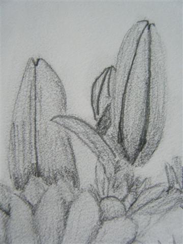 Graphite Detail