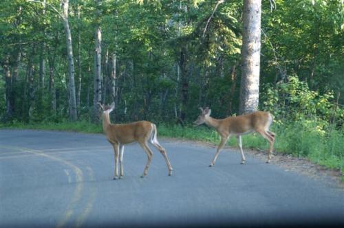 National Park Deer